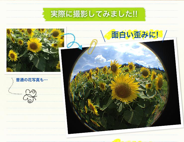 普通の花写真も・・・ 面白い歪みに!